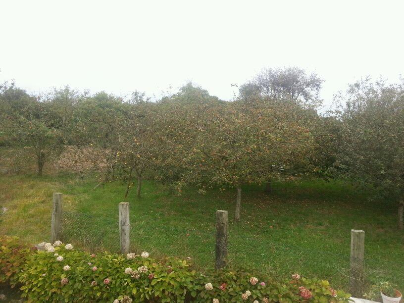 Una de las pocas pumaradas que queda en Celorio, situada en Joxu y propiedad de Manolo Oves - Celoriu.com